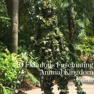 Ten Fabulous Fascinating Animal Kingdom Facts