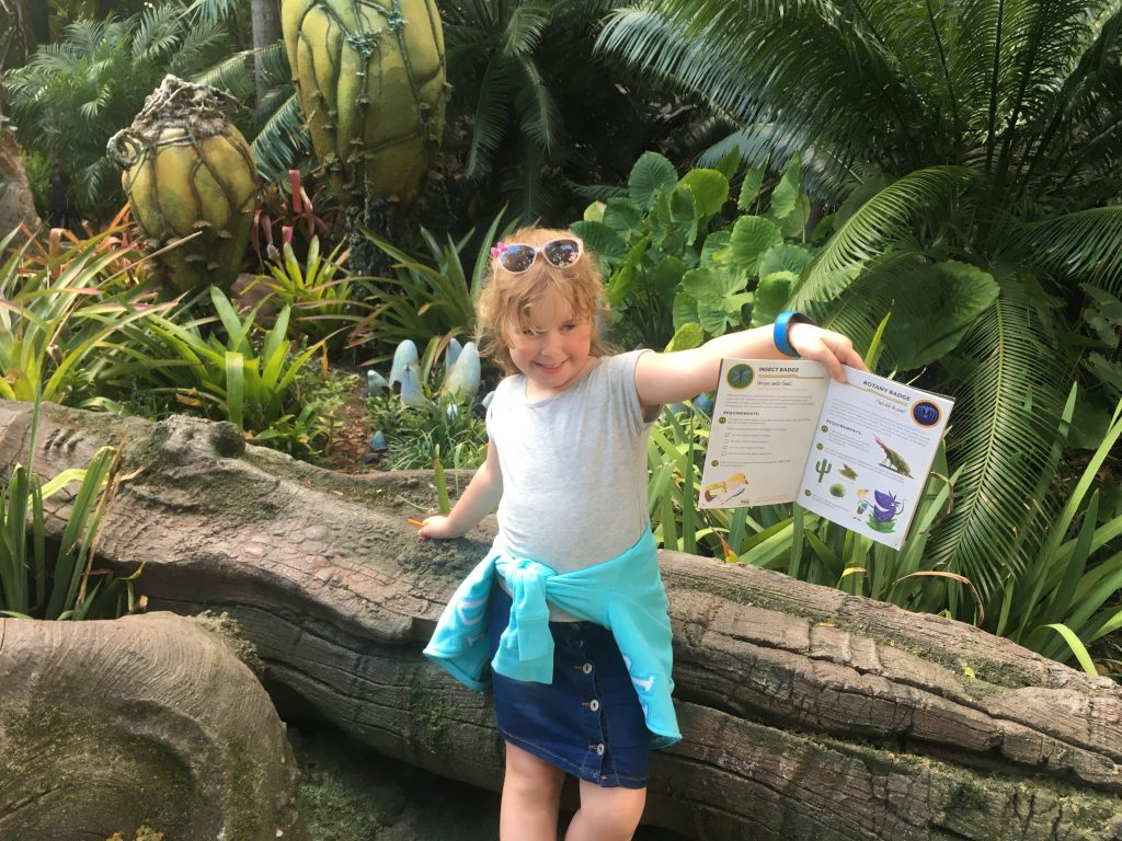 Guide to Disney's Animal Kingdom for Beginners