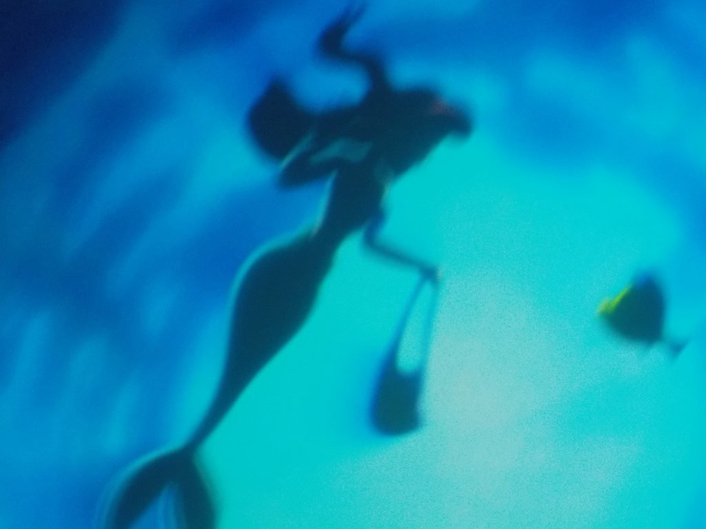 Under the Sea: Journey of the Little Mermaid Guide to Magic Kingdom