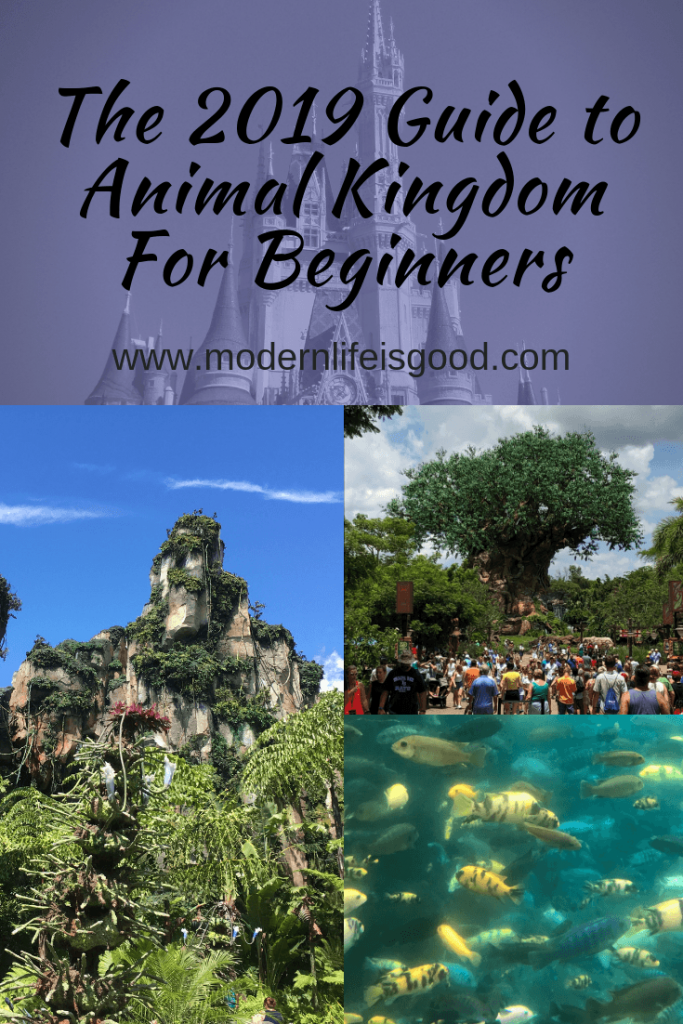 Family Travel Guide to Disney's Animal Kingdom Walt Disney World