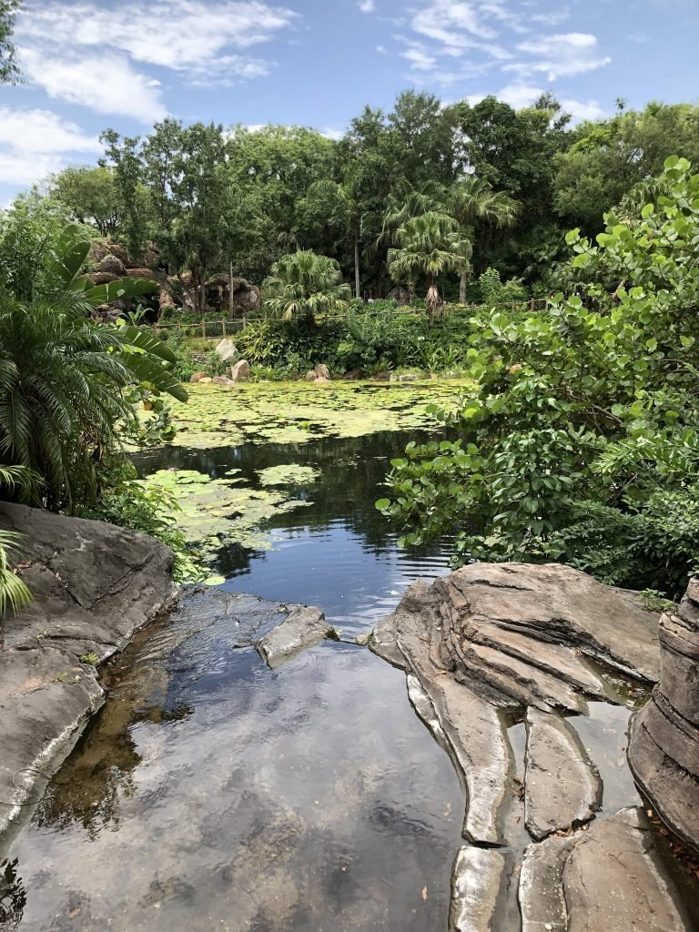 Animal Kingdom Tips and Tricks 2019