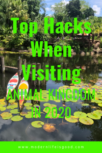 Disney's Animal Kingdom is growing and becoming more popular. Following the opening of Pandora - The World of Avatar it is essential you have a plan. Here is our Top Animal Kingdom Hacks for 2020. Our Animal Kingdom Tips & Tricks will help make sure you have a great vacation.