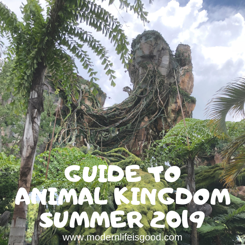 Updated for Summer 2019 our Guide to Animal Kingdom for Beginners is an essential guide for first-time visitors & experienced travellers including Pandora - The World of Avatar