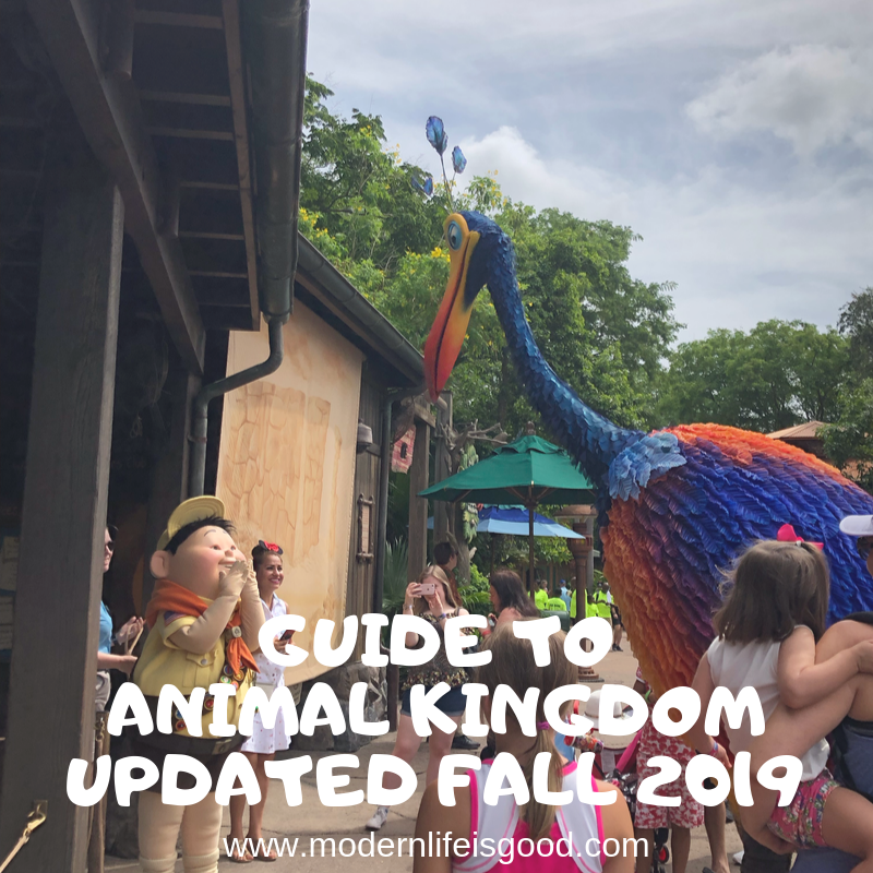 Our Guide to Disney's Animal Kingdom for Beginners is full of the latest information to plan your Walt Disney World Vacation. Our tips and Tricks are family-focused and will ensure you have a great vacation whether you are a first-time or repeat visitor.
