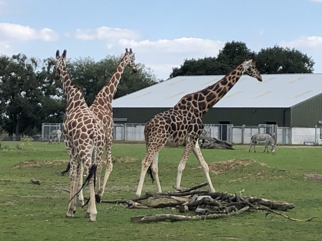 Yorkshire Wildlife Park is a fantastic family zoo